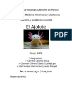Ajolote