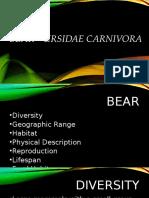BEAR – Ursidae Carnivora