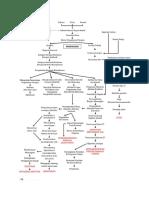 pathway pneumonia.docx