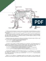Anatomia Perros