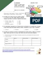 actividadsobreelsistemanerviosobiologa3eso-140202144743-phpapp01.pdf