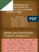 Ppt Layu Fusarium Kel 3-2