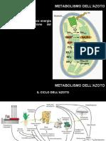 Metabolismo dellazoto