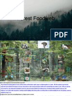 forest foodweb by zach