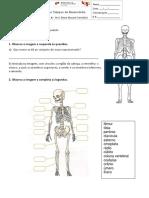 Questão Aula 1 Estudo Do Meio Esqueleto