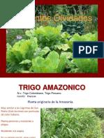 especiesolvidadas.pdf