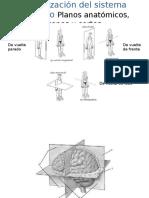 Clase 2 y 3, qué son las neurociencias, organizacion SN.ppt