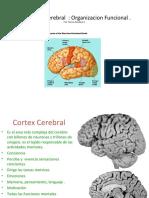 El Cortex Of