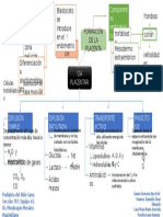 Transferencia Placentaria. MAPA, Equipo 1-Grupo 707