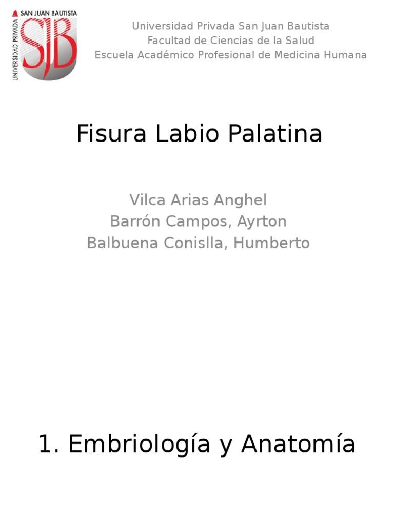 Famoso Diagrama De La Anatomía Del Labio Molde - Imágenes de ...