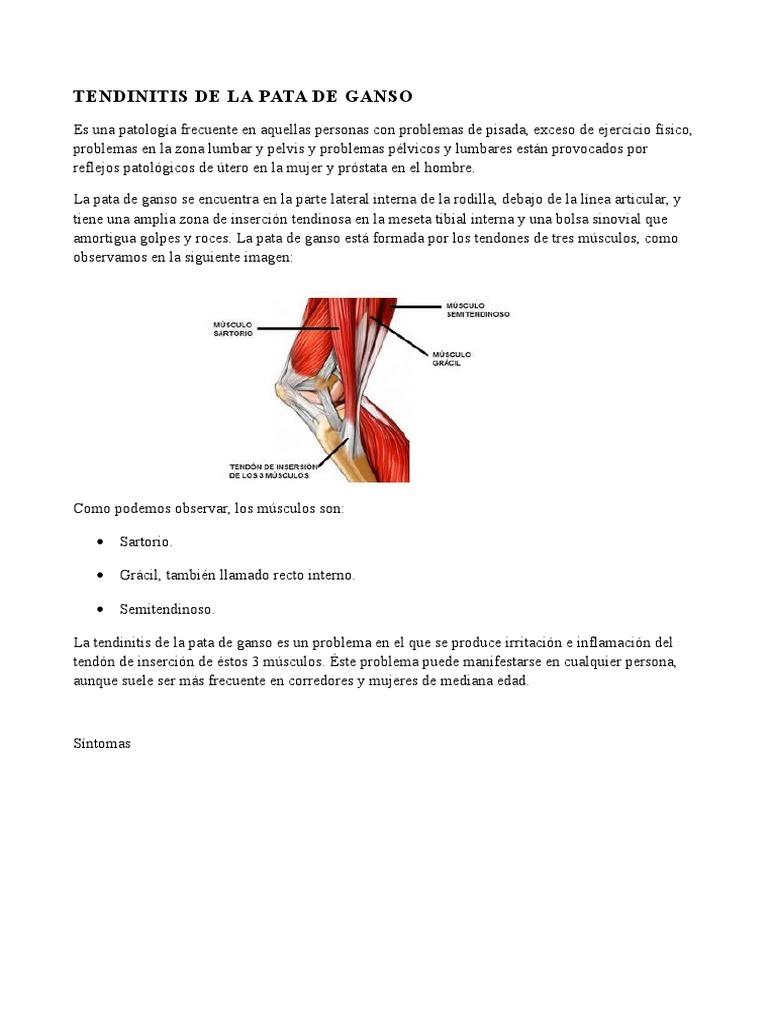 Dorable Músculos Y Tendones Anatomía De La Rodilla Viñeta - Imágenes ...