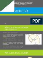 Miología (1)