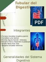 Porción Tubular Del Aparato Dig.