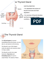 Physiology of the Thyroid Gland