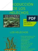 reproduccion-de-los-helechos1.pps