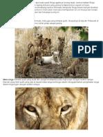 Ciri-ciri Khusus Singa