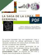 La Saga de La Linea Germinal