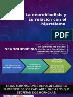 Vasopresina y Oxitocina