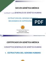 1.1 Estructura del Genoma Humano y Mecanismos de Expresión Génica.pdf