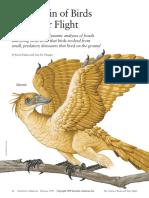 SA Origin Bird FlightKPLC