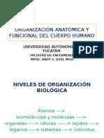 Organización Anatómica y Funcional Del Cuerpo Humano