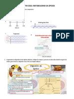 Seminario Bioquímica Metabolismo de Lípidos