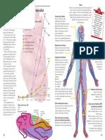 cvd_atlas_01_types.pdf