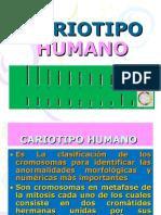 CARIOTIPO HUMANO (1).ppt