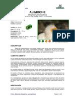 Ficha ALIMOCHE Neophron Percnopterus