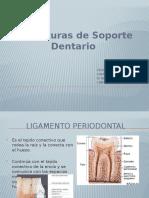 Estructuras de Soporte Dentario