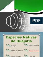 BIOLOGIA COMPARADA DE GRUPOS SELECTOS, ESPECIES NATIVAS.pptx