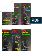 student work - mitosis activity