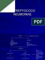 8.1 Estreptococo Neumoniae ( Practica)