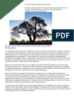 Organizaciones Sociales Alertan Por La Ley de Bosques Aprobada en La Provincia