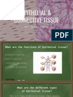 epithelial and connective tissues
