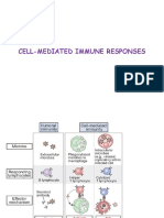 Cell Mediated Immune Responses