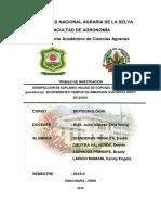 Desinfeccion de Explanes (Hojas) de Copoazu (Tehobroma Grandiflorum) en Diferentes Tiempos de Inmersion Con Hipoclorito de Sodio