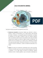Biologia 1a INSTRUCTORÍA. Célula Eucariota ANIMAL