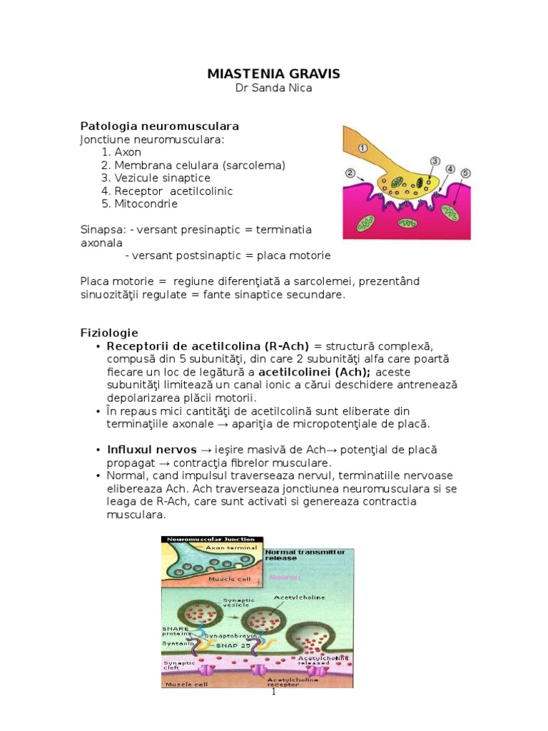 Myasthenia gravis - Traducere în română - exemple în germană   Reverso Context