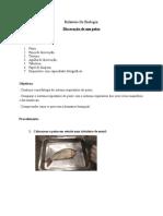 Relatório de Biologia