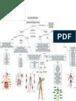 Mapa Sistemas Cuerpo Humano