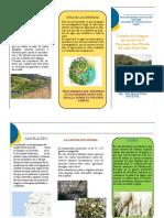 TRIPTICO ECOLOGIA.pdf