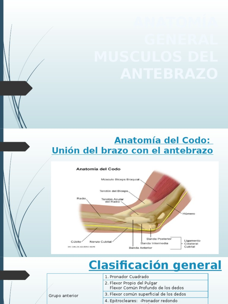 Musculosantebrazos 150218181736 Conversion Gate01