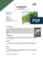 Ficha ALMENDRO _ Prunus dulcis_.pdf
