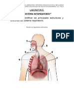 4 Laboratorio Sistema Respiratorio Numero 4