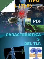 RECEPTORES TIPO TOLL (TLR)