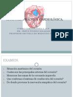 anatomíacor