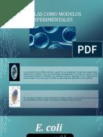 Células Como Modelos Experimentales (1)