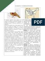 Sistema Digestivo y Sistema de Pastoreo