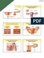 Sistema-Genital-Feminino.pdf